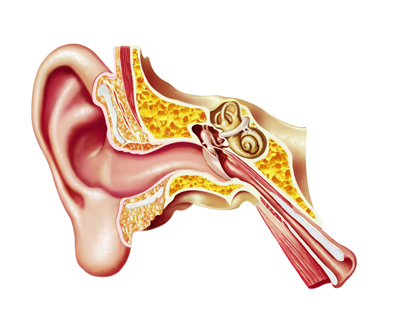 how we hear - how the ear works