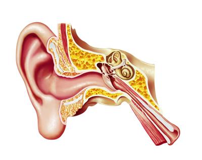 how we hear - how the ear works